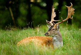 Deer Food Plot Seed thumbnail