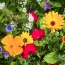 Regional Wildflowers