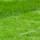 Grass Seed thumbnail