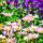 Wildflower Seed thumbnail