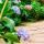 Foliage Plant Seed thumbnail
