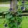 Vines & Climbers Seed thumbnail
