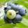 Fruit & Vegetable Seed thumbnail