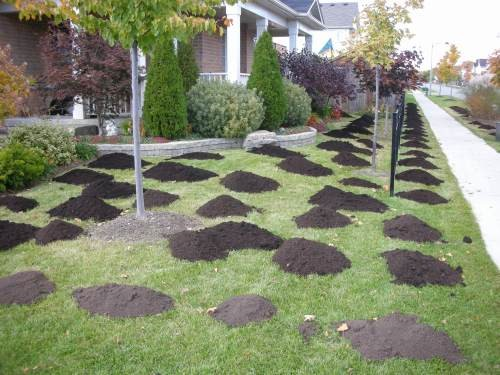 compost top dress lawn