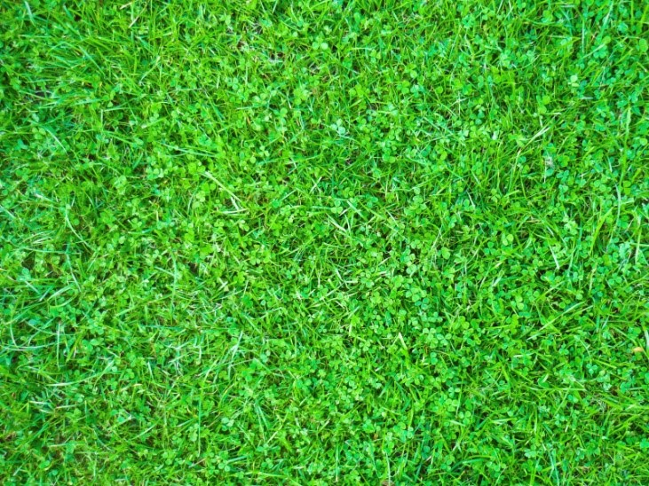 Growing Sustainable Lawn
