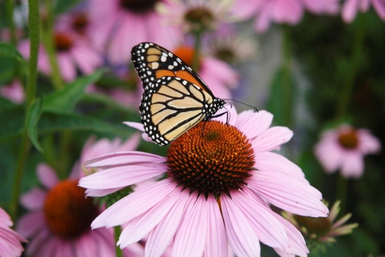 Native Plants for Wildlife
