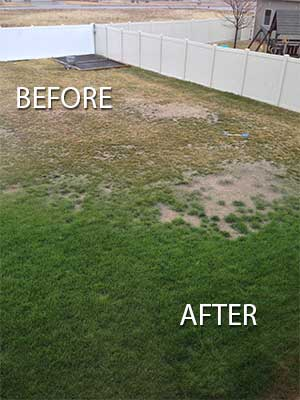 Soil Doctore Before and After