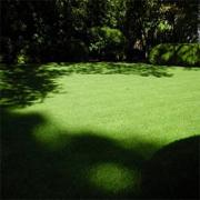 Poa Supina Shade Grass Blend