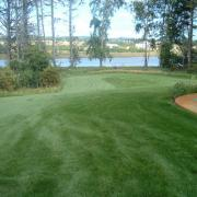 Combat Transition Fescue