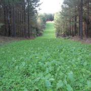 Sweet Spot Deer Food Plot Mix Southern States
