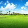 Maya Bermuda Grass