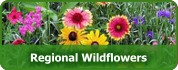 Regional Wildflower Mixtures