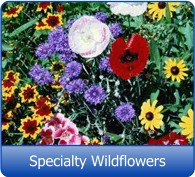 Specialty Wildflower Seed