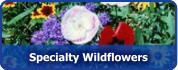 Specialty Wildflower Mixtures