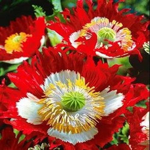 dansk flowers