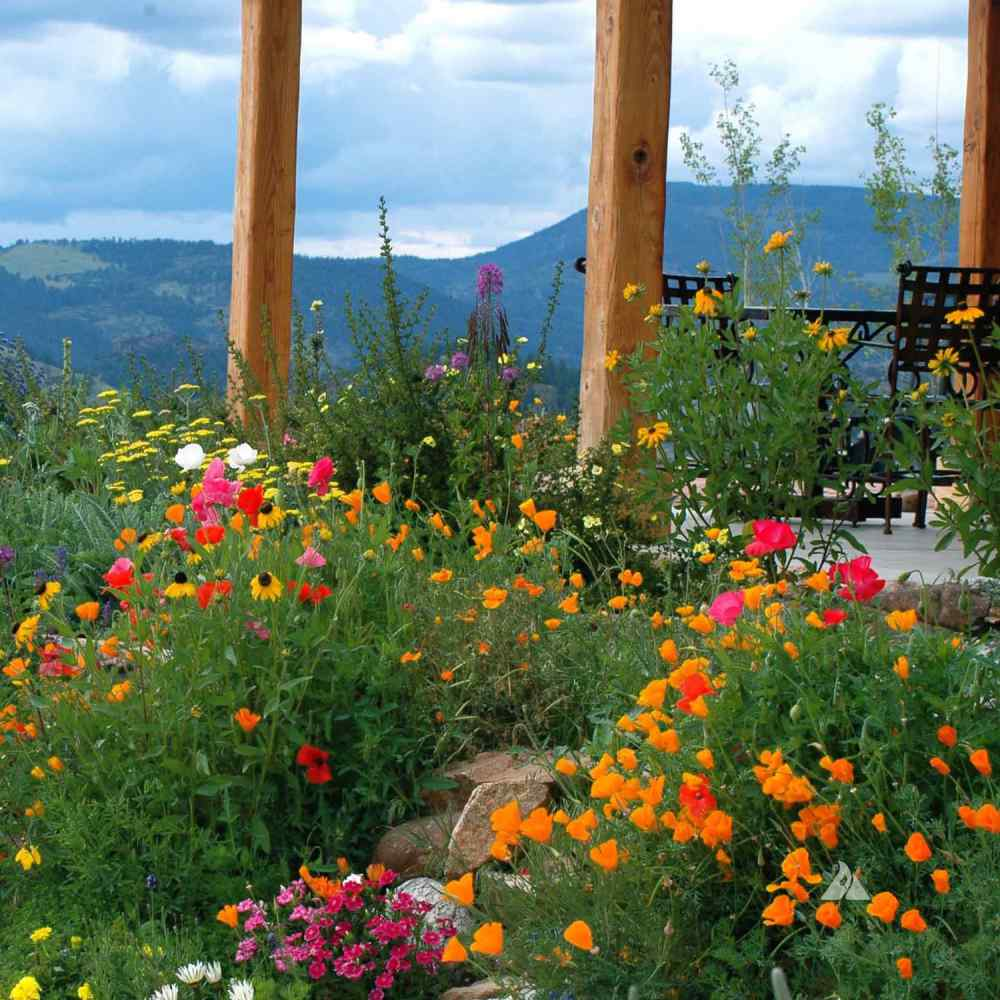 Firewise Wild Flower Seeds For Fire Prevention