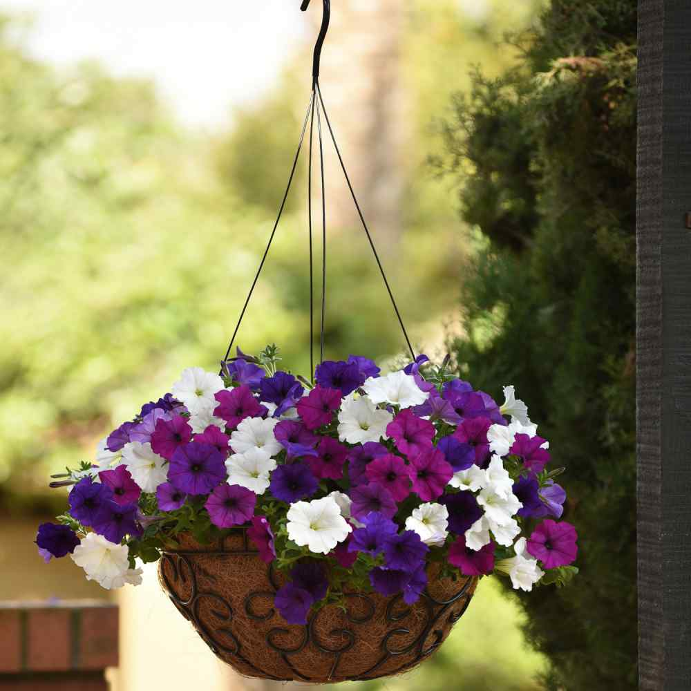 Easy Wave Spreading Petunia Great Lakes Flower Seed Mix