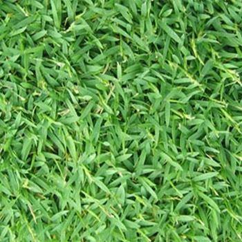 Carpet Grass Flooring Design Pictures