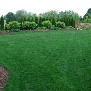 Midnight Kentucky Bluegrass Grass Seed