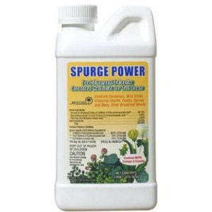 Spurge Power