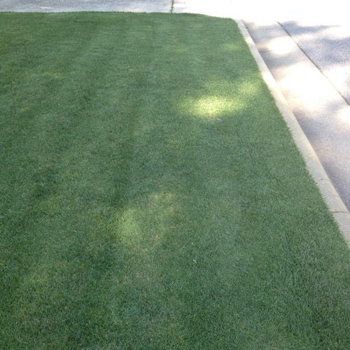 Zenith Zoysia Grass Seed Warm Climate Grass Seed