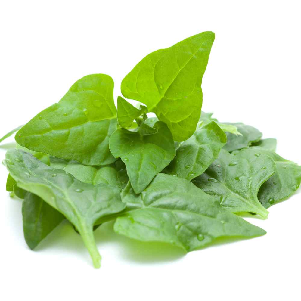 New Zealand Spinach Plant Leaves