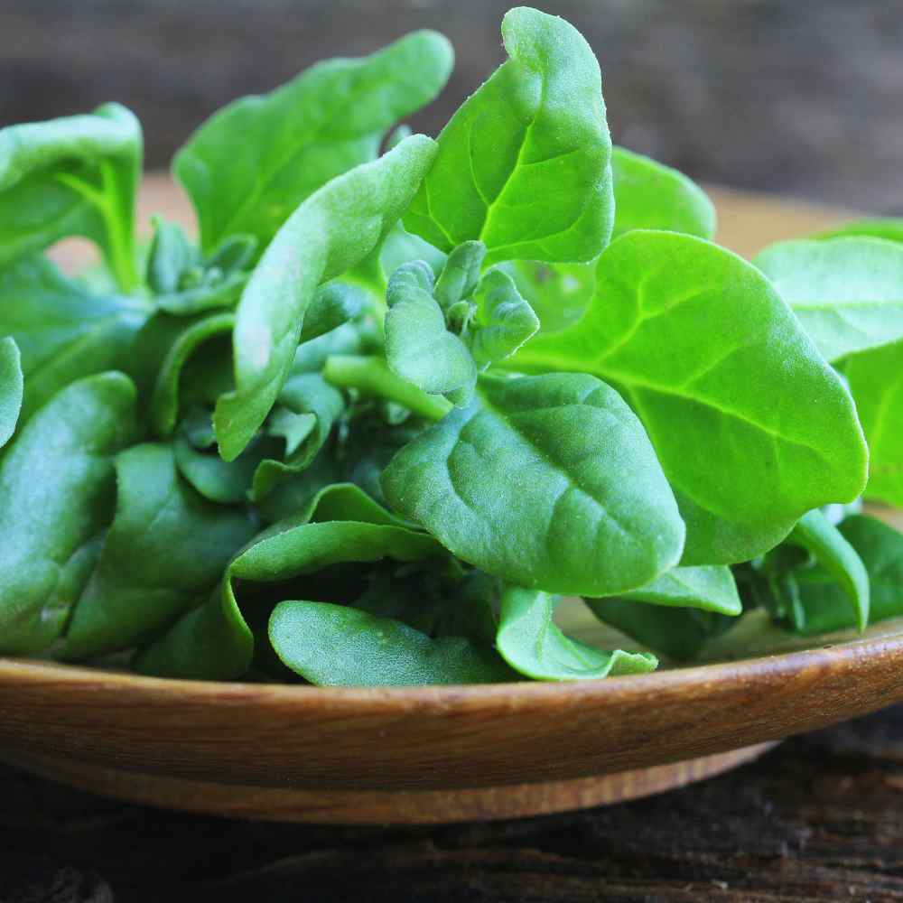 New Zealand Spinach Plate