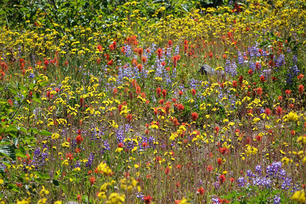 Bulk Wildflower Seed Mixes Annual And Perennial