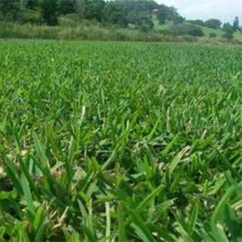 Xeriscape Grass Seed Native Grasses