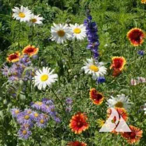 Intermountain Wildflowers