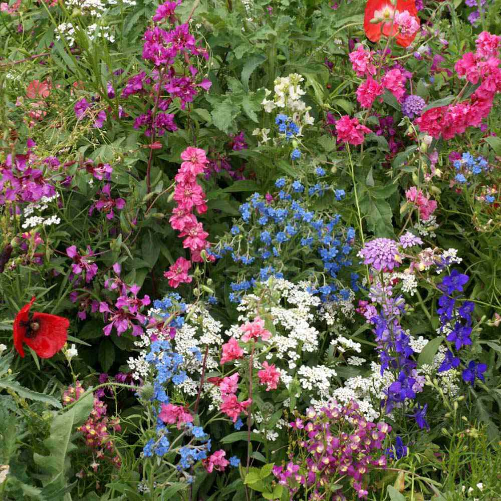 Partial Shade Wild Flower Seed Mix