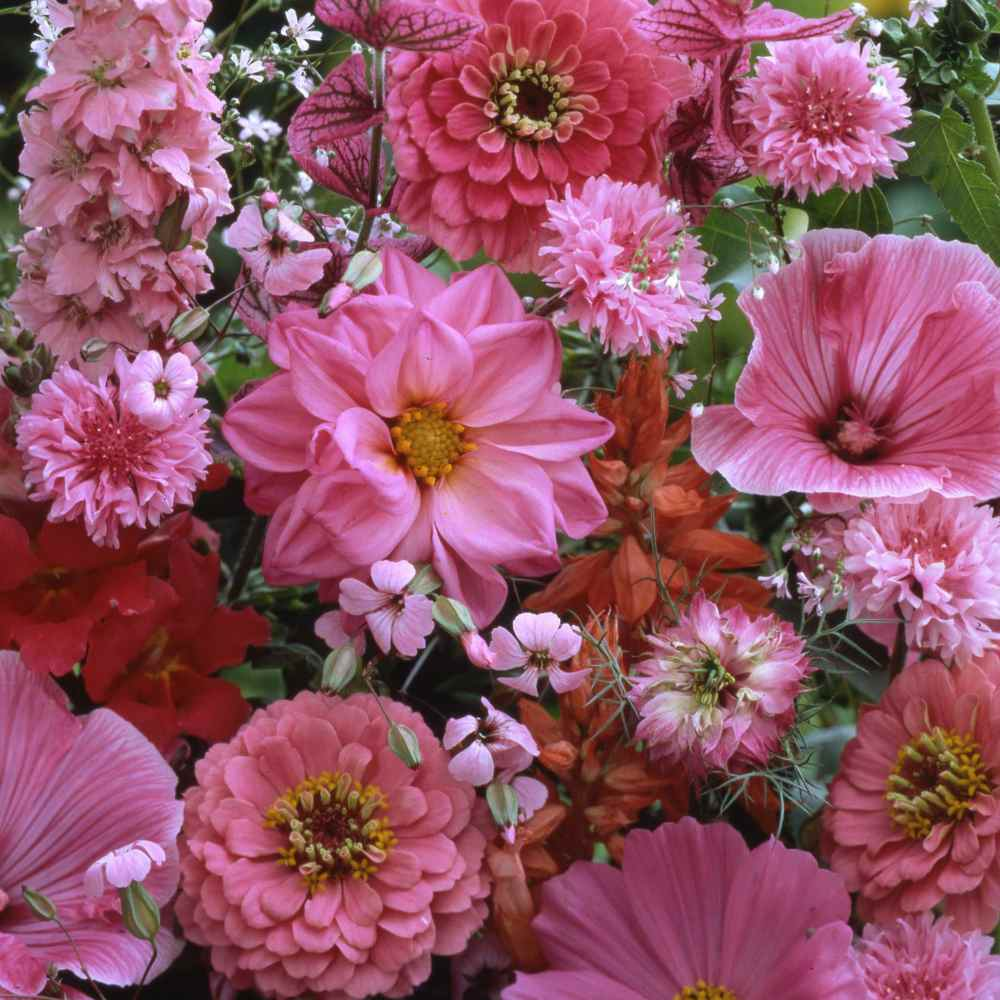 Pink flower seed pink mix wildflower seeds pink wildflowers mightylinksfo