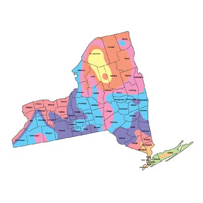 New York Grass Seed